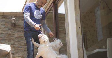 Con Centro de Control Animal, Fernando Flores cuidará de animales en situación de casa y calle